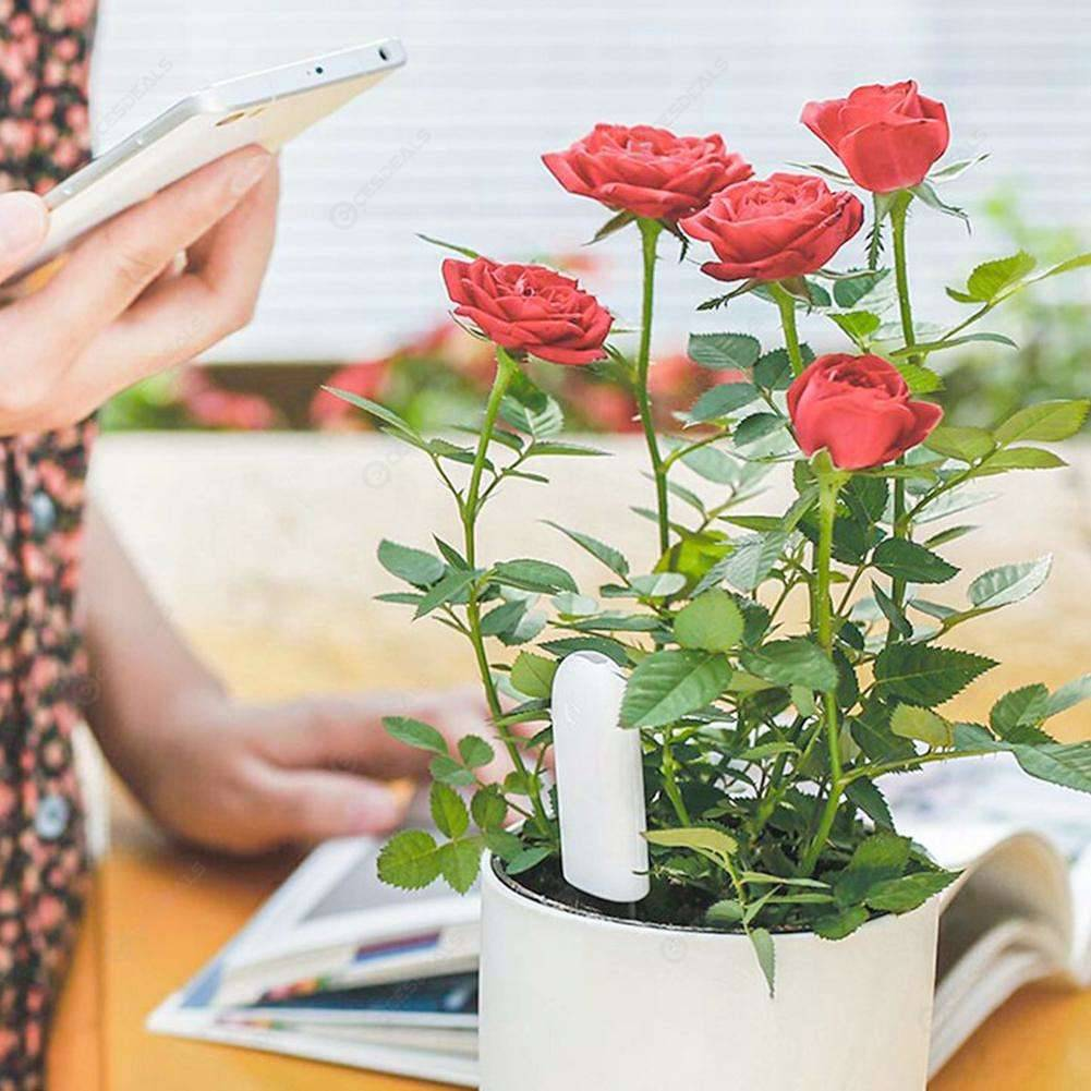 International Xiaomi Mi Flora Monitor Digital Soil Water Light Tester