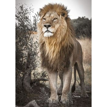 5D DIY Full Drill Diamond Painting Lion Desert Cross Stitch Embroidery Kits