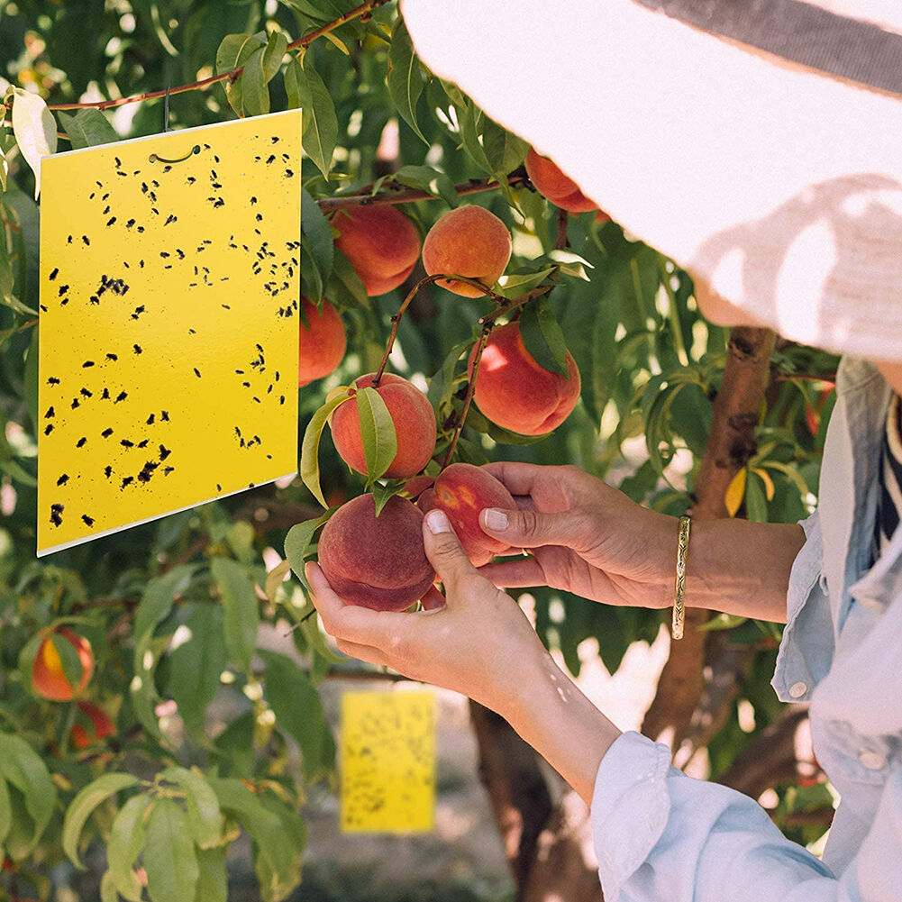 20pcs 8x10 inch Sticky Trap for Fruit White Black Fly Fungus Gnat Yellow